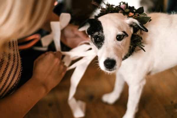 Květinový obojek pro psa, ozdoba z květin.