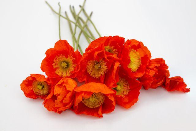 MákColibri ′Arancio′