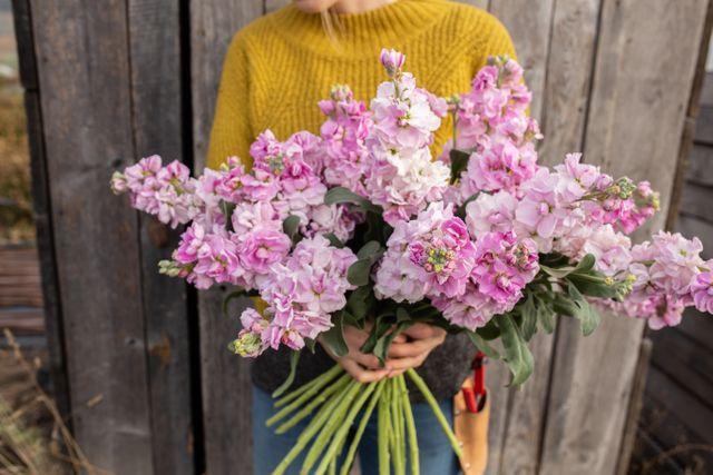 Fiala Katz Cherry Blossom