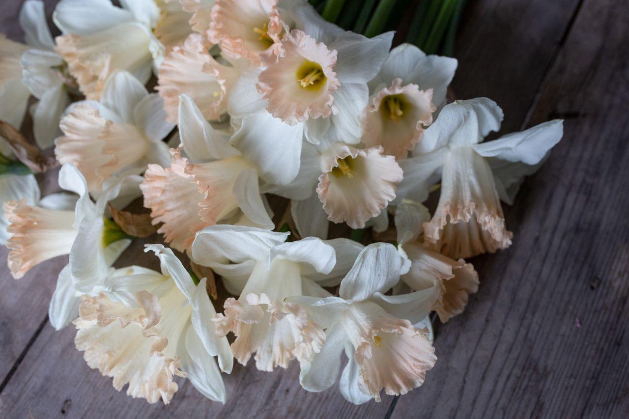 Narcis British gamble, Loukykvět