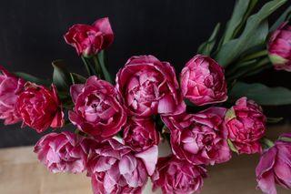 Tulipán Aveyron, Loukykvět