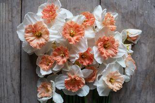 Narcis Precocious, Loukykvět