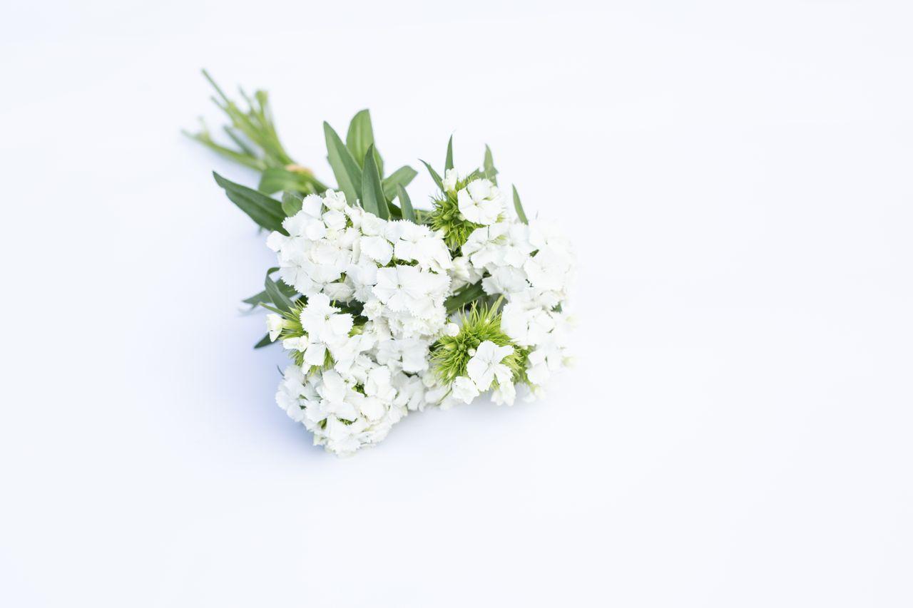 Hvozdík Sweet White, Loukykvět