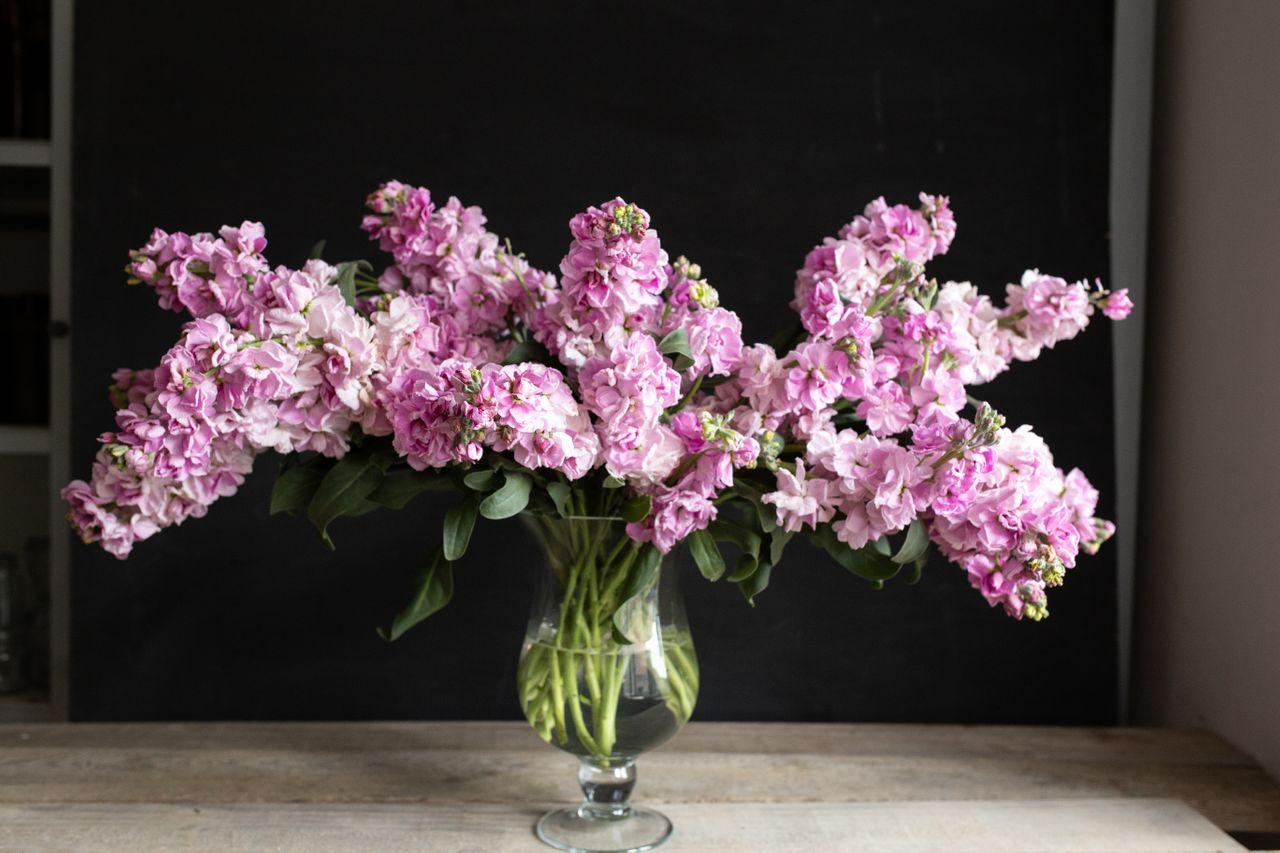 Fiala Katz Cherry Blossom, Loukykvět