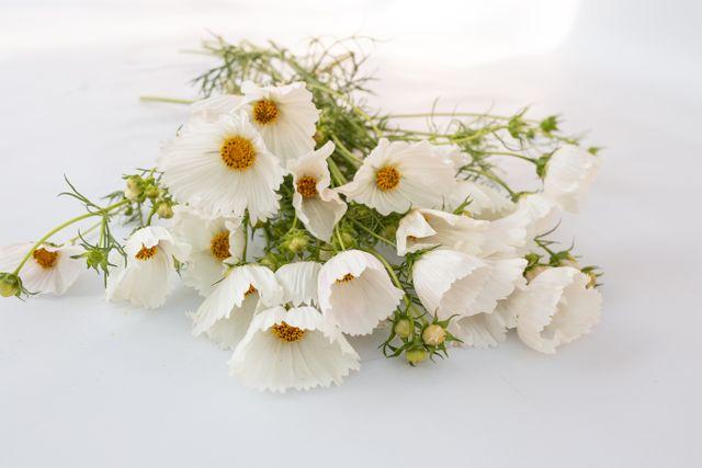Krásenka Cupcakes White