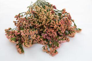 Statice QIS Apricot, Loukykvět