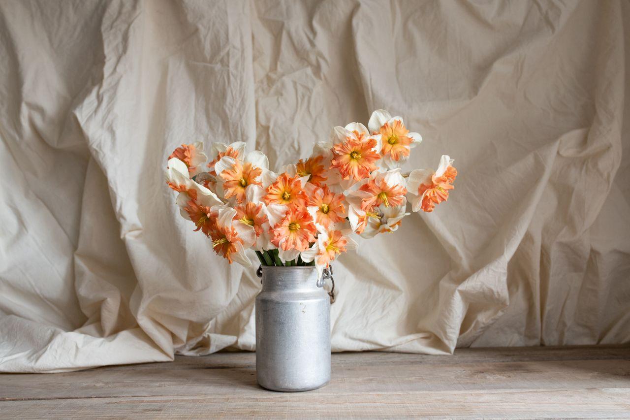Narcis Shrike, Loukykvět