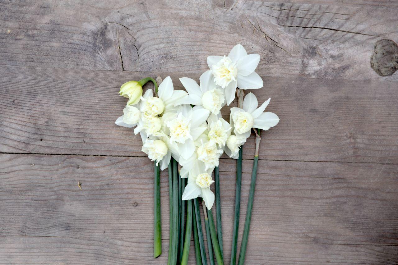 Narcis White Marvel, Loukykvět