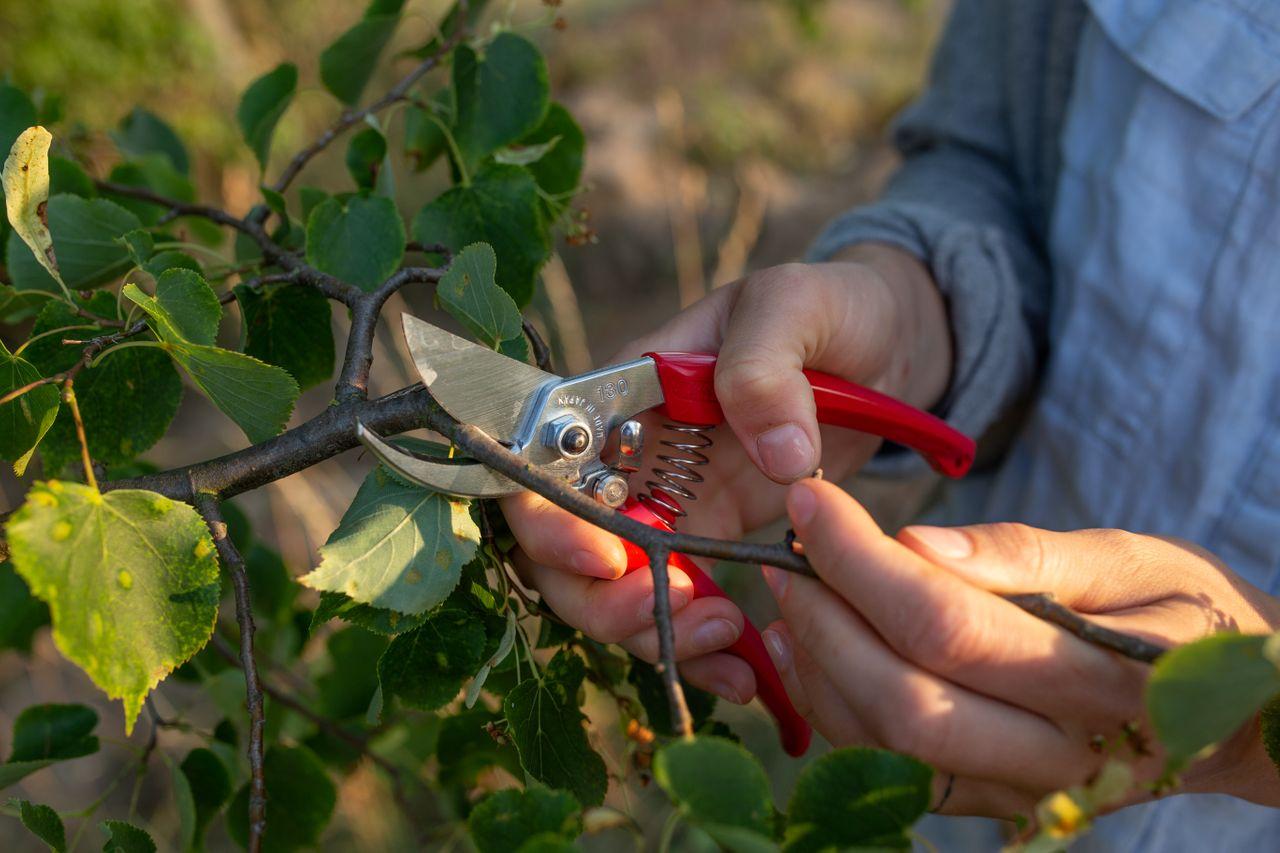 Nůžky na silné stonky a větve, Loukykvět