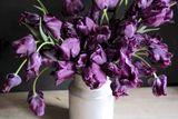 Tulipán Victoria's Secret