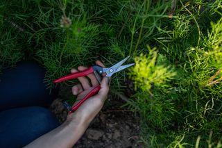 Celokovové floristické nůžky, Loukykvět