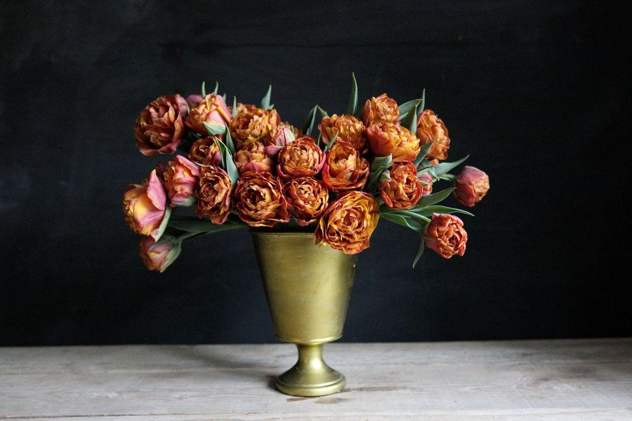 Tulipán Brownie, Loukykvět