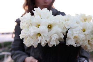 Narcis Colblanc, Loukykvět