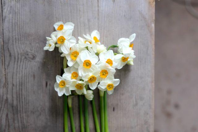 Narcis Geranium, Loukykvět