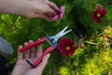Floristické nůžky s celokovovým tělem