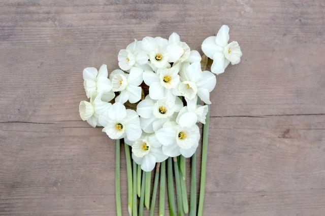Narcis Stainless, Loukykvět