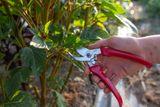 Nůžky na silné stonky a větve