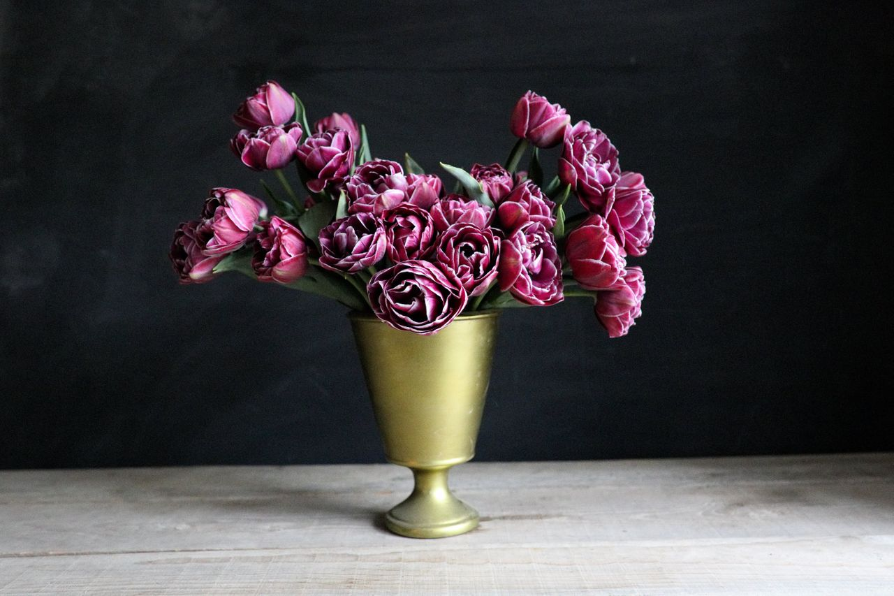 Tulipán Dream Touch, Loukykvět