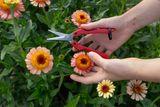 Floristické nůžky