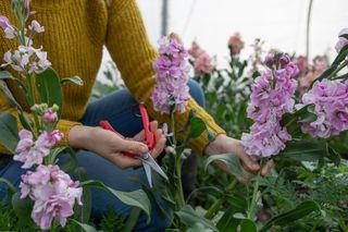 Floristické nůžky, Loukykvět