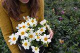 Jiřina Bride's bouquet
