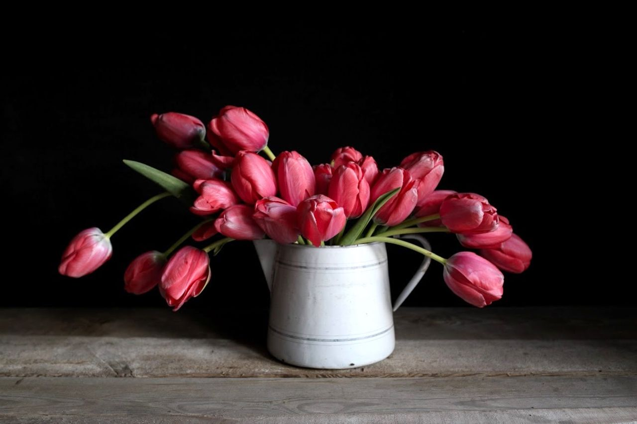 Tulipán Pink Impression, Loukykvět